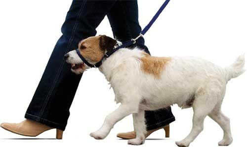 ¿Como hago para que mi perro no tire de la correa? : TiendAnimal
