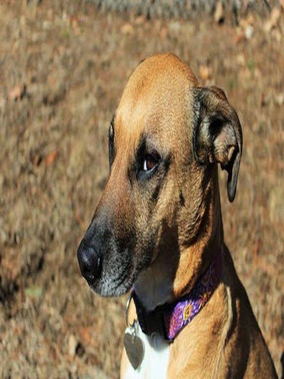 Dog Tips For Summer Dogtrainingobedience Dog Training Tips