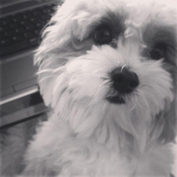 #cachorro   Zac