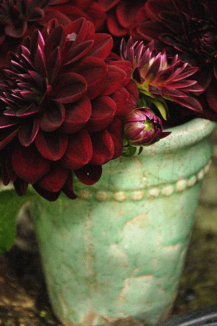 love this color of pot with the deep red of the flowers