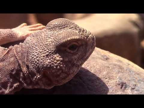 Pin By قناة اغرب الاشياء On Reptileset1animaux Lizard Animals