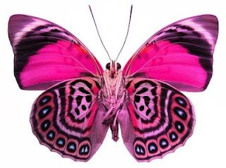 Pink butterfly in exotic patterns... An inspiration for Matthew Williamson Resort 2015.