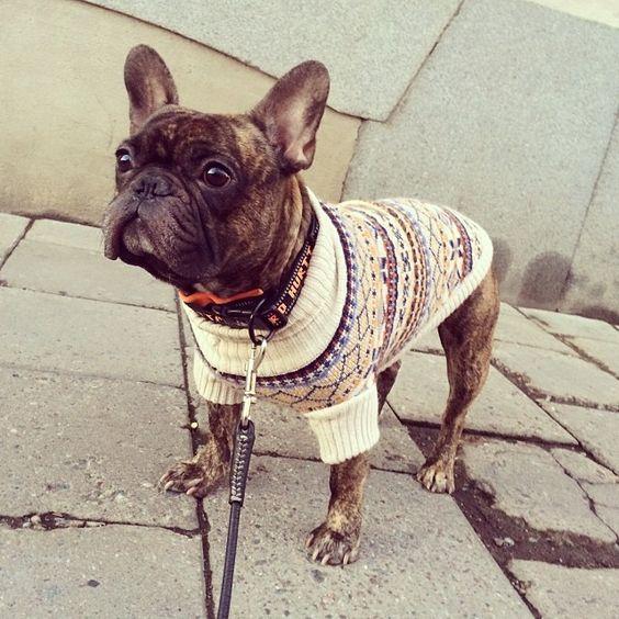 Mackan har varit på HM och köpt sig en ny tröja  #Padgram