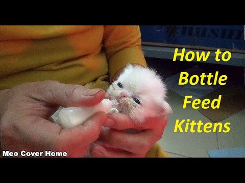 Baby Cat Drinking Milk From Feeding Bottle Kittens Being Bottle Fed Meo Cover Home Baby Cats Cat Drinking Kittens