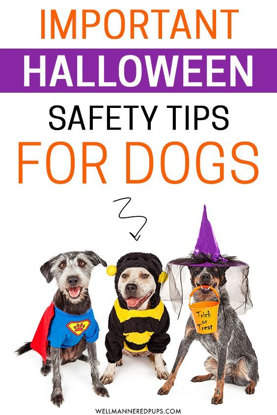 Halloween Tips For Dogs Dog Care Dog Safety Dog Care Tips