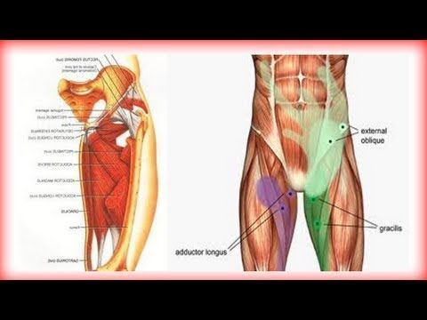 43++ Hip and groin muscles ideas in 2021