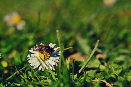 Podrán cortar todas las flores, pero no podrán detener la primavera.