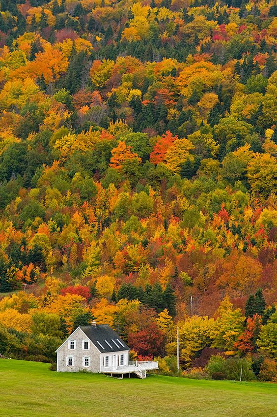 Nice backyard! ... Cottage in Front of Autumn Colours, photo: John Sylvester