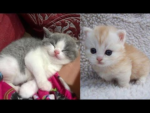 Cute Baby Animals Videos Compilation Cute Moment Of The Animals Soo Cute 32 Youtube Baby Animal Videos