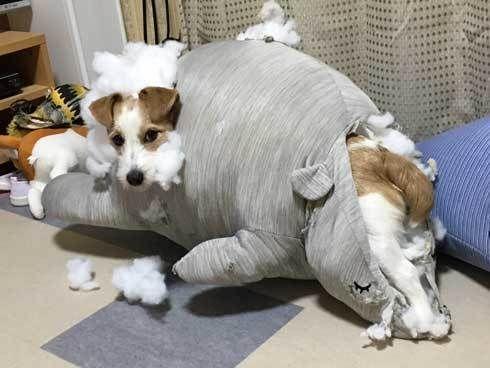 あー ワンコのいたずらに飼い主絶句 マンガみたいな犯行現場が目撃される ねとらぼ Yahoo ニュース ワンコ 可愛い犬 犬 おもしろ