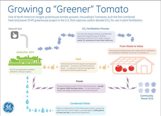 """How are we using tech to grow a """"greener"""" tomato?"""