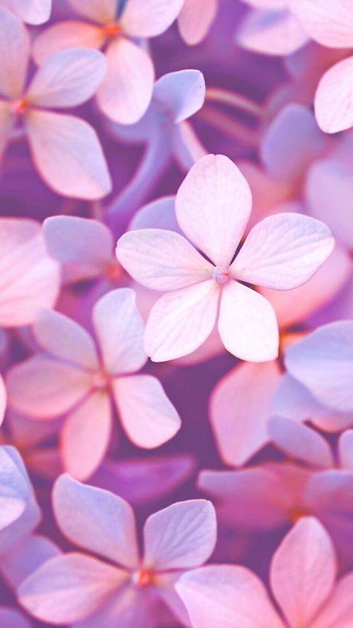 Imagine Descoperit De Geya Shvecova Descoperă și Salvează Propriile Imagini și Videoclipuri Pink Flowers Wallpaper Flower Wallpaper Flower Phone Wallpaper Cute cellphone wallpaper images