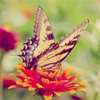 Butterfly,...