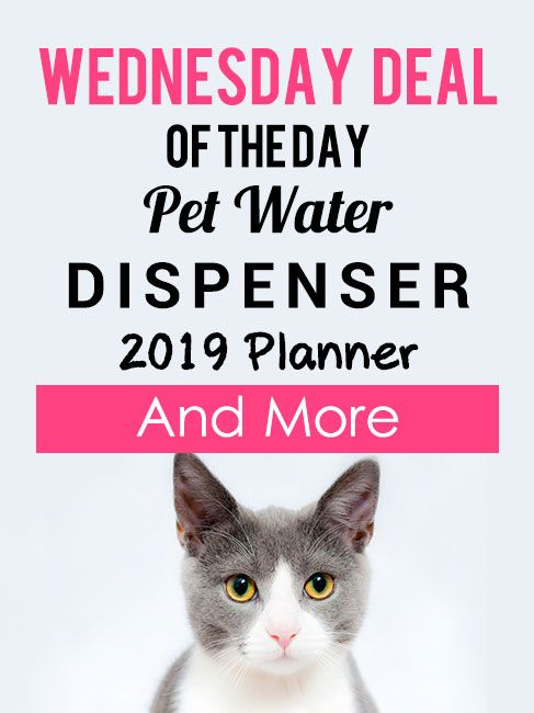 Wednesday Deal Of The Day Pet Water Dispenser 2019 Planner And More Gift Embedded Water Dispenser Planner Day