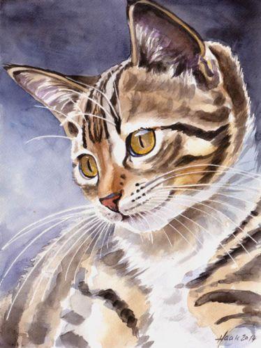 Cat-katze-studio-milamas