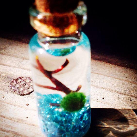 DIY Marimo moss ball mini terrariums and aquariums!  northwestkombucha.com