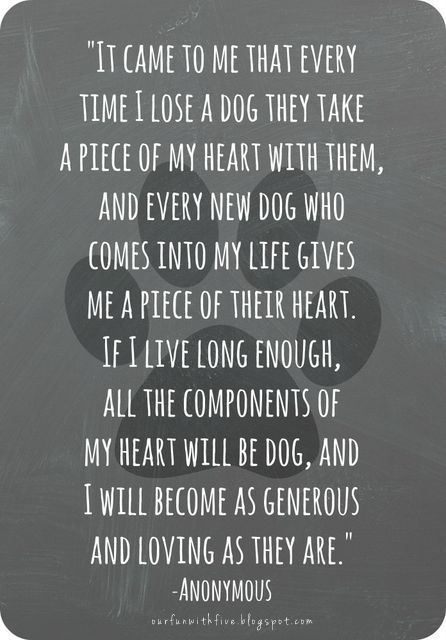 Saying goodbye to a pet.  In doing rescue, saying goodbye happens in many ways.  From saving a sick animal, to fostering, to adoption & to old age.  It' s never easy.