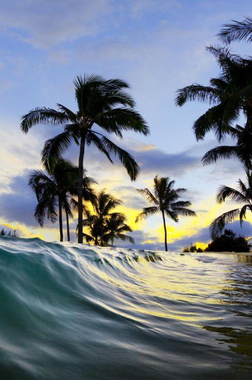 Hawaiiwww.SELLaBIZ.gr ΠΩΛΗΣΕΙΣ ΕΠΙΧΕΙΡΗΣΕΩΝ ΔΩΡΕΑΝ ΑΓΓΕΛΙΕΣ ΠΩΛΗΣΗΣ ΕΠΙΧΕΙΡΗΣΗΣ BUSINESS FOR SALE FREE OF CHARGE PUBLICATION