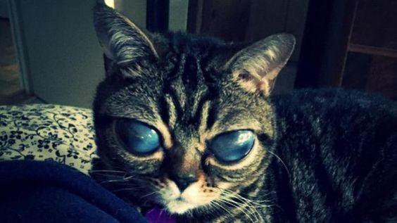 La chatte aux yeux d'alien
