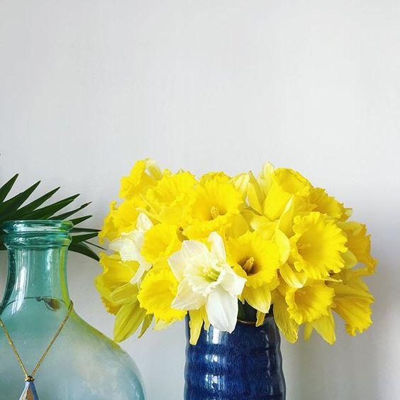 So not ready for daffodil season to be over but also really looking forward to summer blooms! 🌼🌼🌼 Happy hump day people! Roll on Friday 😊 . . . . . . . . . #nestandthrive #abmathome #abmplantlady #acolorstory #dscolor #abmlifeiscolorful #sodomino #bloomandgrow #daffodils #daffodilseason #tinytinymoments #thesweetlifeunscripted #thatwinterspringthing #themindfulapproach #facethespring #botanicalforagersunitedsocietyinc #thisishowihueit #colorcolourlovers #dsyellow #ihavethisthingwithyellow #n