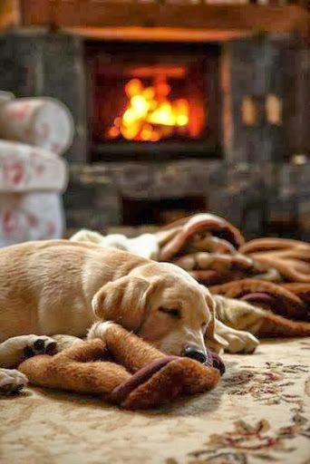 Perritos durmiendo.