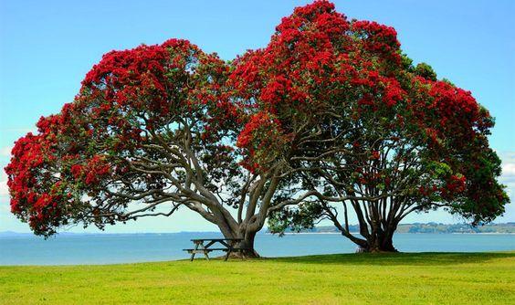 Alberi da fiore rosso