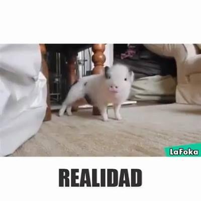 EXPECTATIVA X REALIDADE!! XD