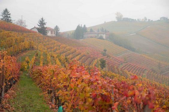 Manhã de outono nos vinhedos de Dolcetto e Moscato, em Mango.