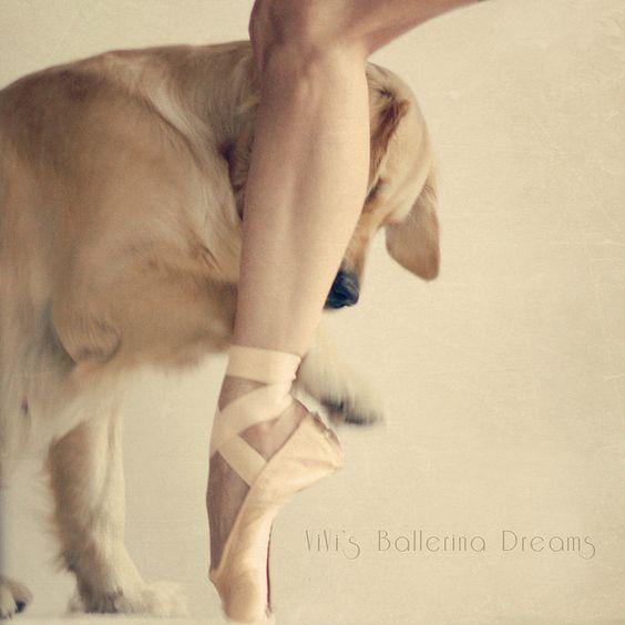 ViVi's Ballerina Dreams: The Joy of Dancing #dog #animal #creature #golden_retriever #life #ballet #ballerina #sport