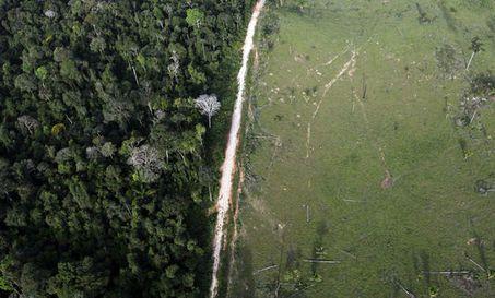 80% de la déforestation est due à l'agriculture