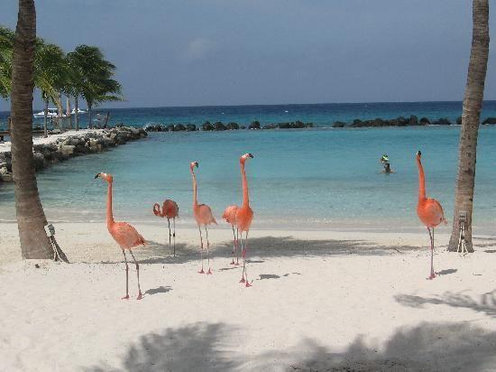 Flamingo Beach Resort (Lanzarote/Playa Blanca) - Resort Reviews - TripAdvisor