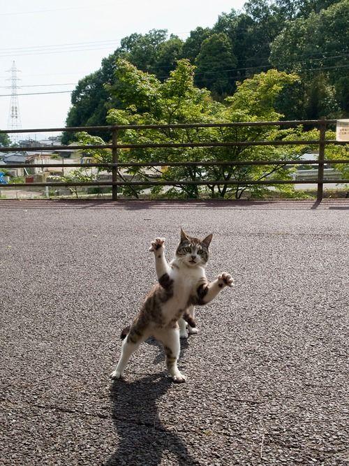"""lesson5:  iwagp:  noshirocket:  pdl2h:  yellowblog:  oharico:  technohell:  hal024:  hal9000m:  furoneko:  lilicalolica:  eurekaeureka:  ふろ場のねこ ex: 広島の猫#578   ブログ主です ありがとうございます        """