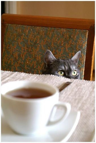 "My kitty would always peek at me at tea time to say, ""I want some, too!"":"