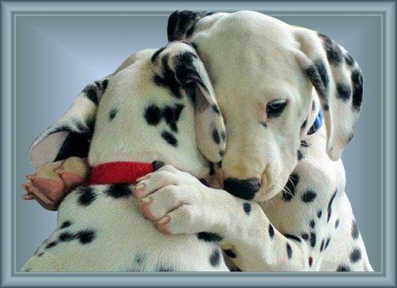 knuffelende dieren - Google zoeken