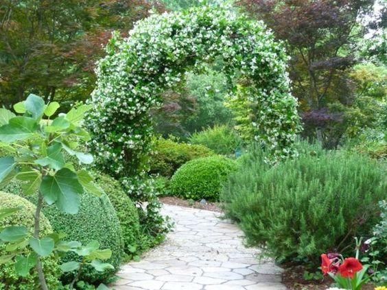 schöne Kletterpflanzen Jasmine weiße Blüten klassischer Garten
