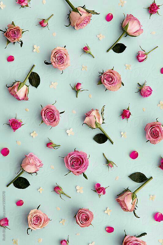 Beautiful Flowers Floral Wallpaper Rose Wallpaper Pink Wallpaper