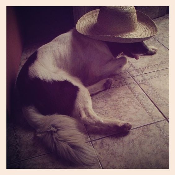 No comments.... Dog with a hat