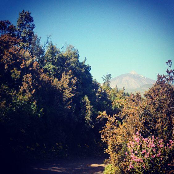 Alltagsfrüchtchen - Ausblick auf den #Teide