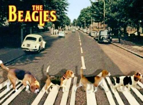 44 Of Today S Freshest Pics And Memes Beagle Funny Beagle Dog Beagle