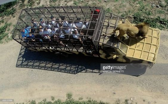 tourists-watch-a-lion-from-inside-a-cage-on-a-vehicle-at-the-safari-picture-id458123958 (1024×635)