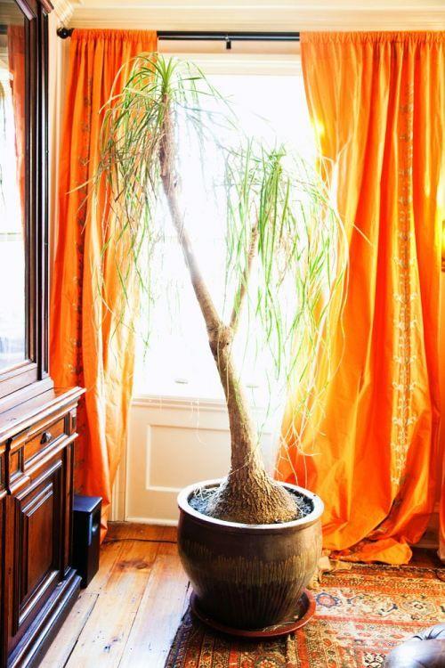 Bright orange curtains living room color ideas navy for Bright orange bedroom ideas