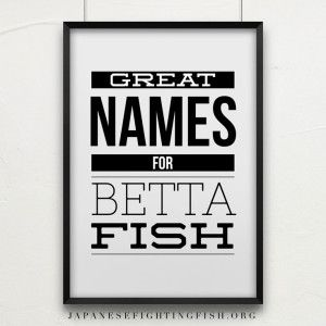 The o 39 jays funny and inspiration on pinterest for Cool betta fish names