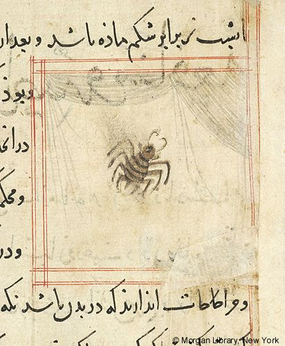 Bestiary, Spider and web- The Morgan Library & Museum
