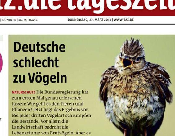 «Perlen des Lokaljournalismus»: Das Web lacht über missratene Schlagzeilen » Storyfilter