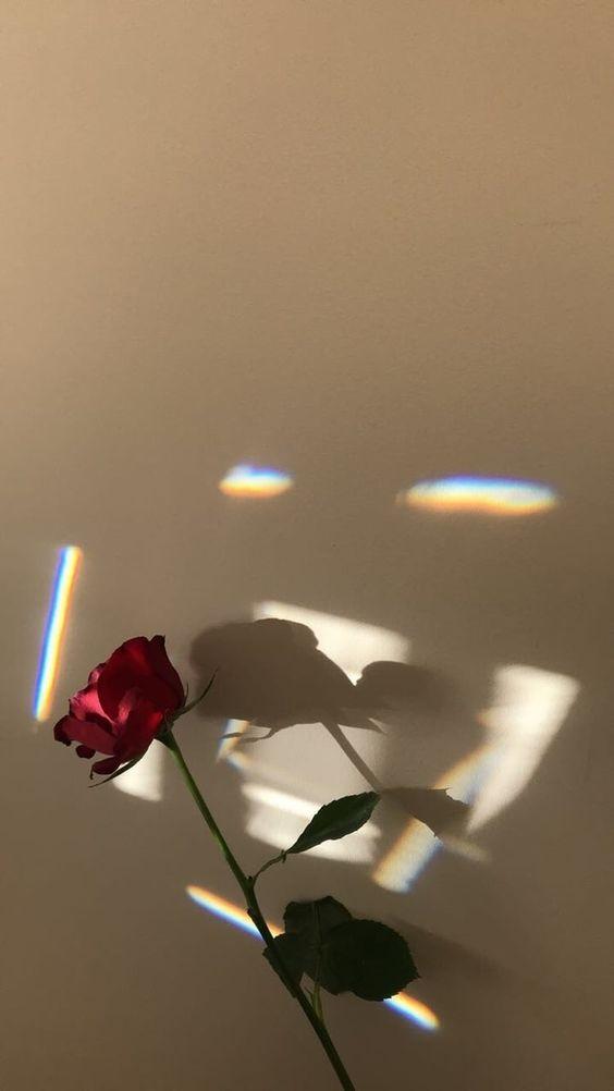 5000 Gambar Bunga Mawar Layu Tumblr Paling Baru Infobaru