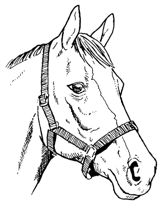 Horse Line Drawings Clip Art Biddle Horse Head Bhh2200