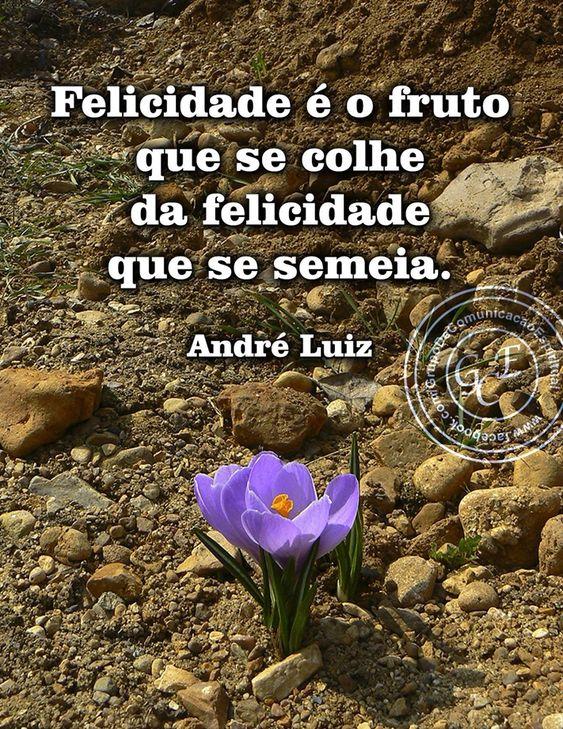 André Luiz - Livro Busca e acharás - Emmanuel / André Luiz - Chico Xavier - Cap. 8 - Cartões de paz