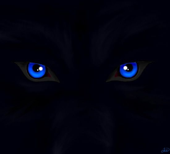 Wolf Eyes In The Dark Hd | www.pixshark.com - Images ...