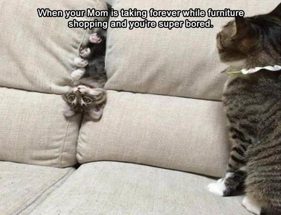 Wholesome Collection Of Adorable Kitten Memes Funny Cat Pictures Funny Animals Funny Cats