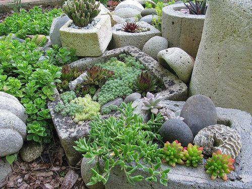 rock garden, June 2012 | Tender succulents mixed with hardy … | Flickr